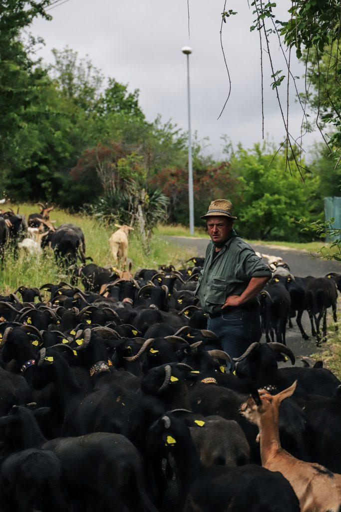 Frano Seratti, pastore in Versola