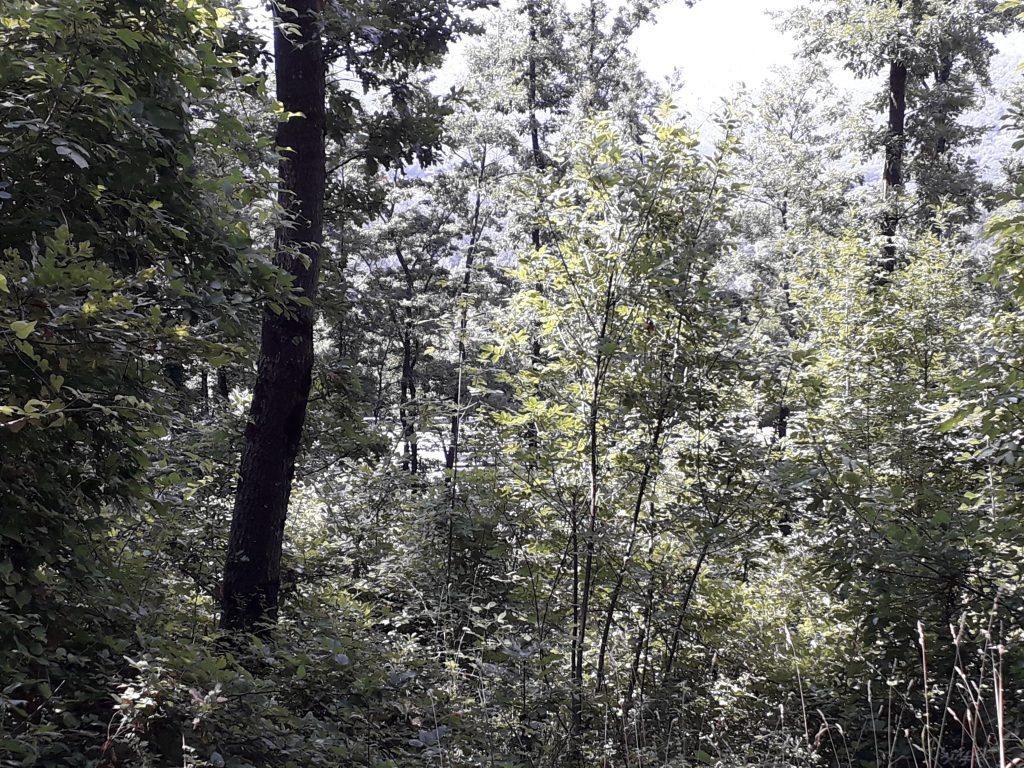 Bagno di foresta: la Valdantena è il posto adatto
