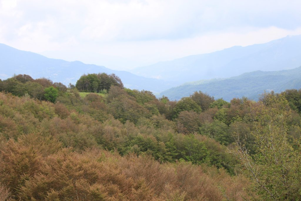 Forest bathing: la Valdantena è luogo ideale per praticarlo