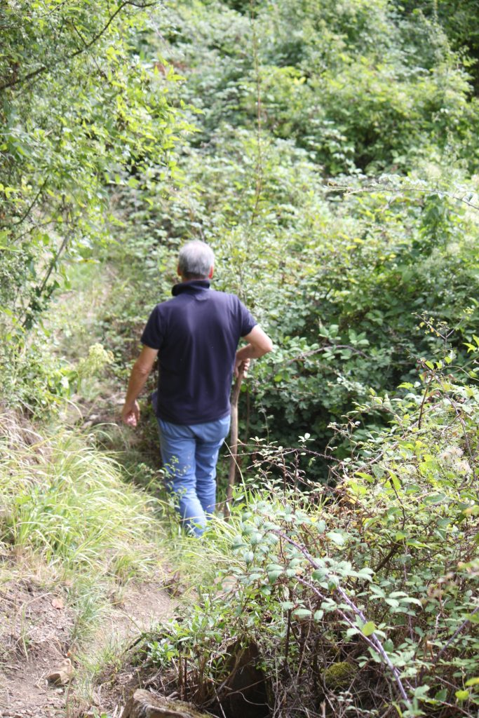 Il forest bathing non è una cura ma è prevenzione