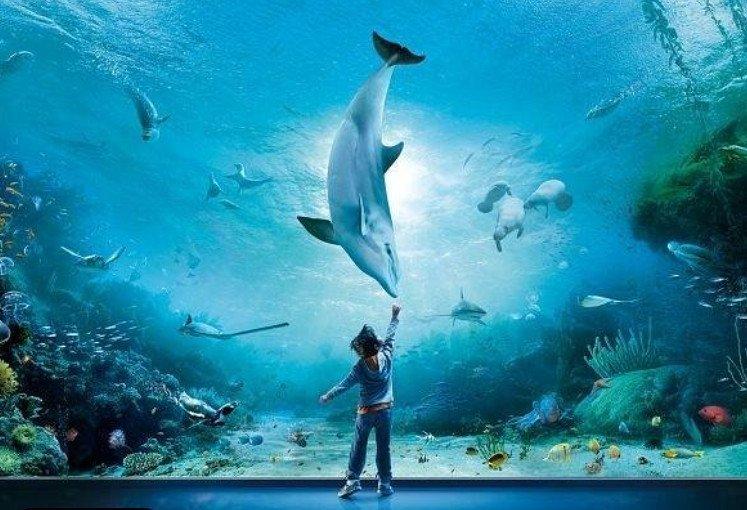 Acquario di Genova: i bambini scoprono un mondo nuovo e affascinante